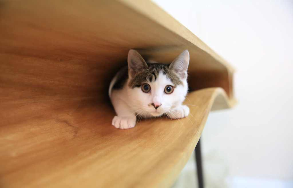 catable table